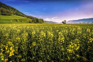 Juin-Couché-de-soleil-sur-le-Val-de-Travers